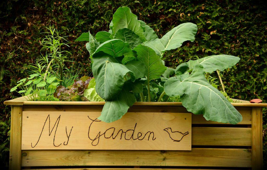 Gesundes aus der Natur -mein Garten